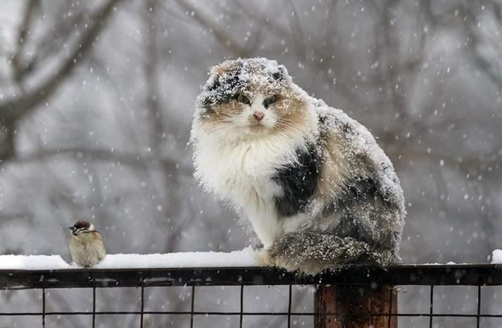Синоптики предупреждают о мокром снеге