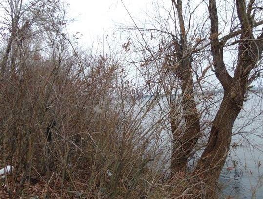 В Киеве обнаружили тело мужчины с пробитой головой (фото)