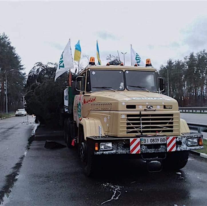Главная ёлка Украины прибыла в конечный пункт назначения (фото)