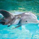 В Трускавце спасли дельфинов и морских котиков от переохлаждения (Фото)