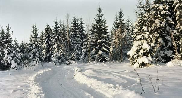 В Житомирской области мастер леса решил подзаработать на новогодних елках