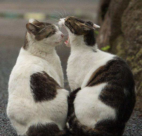 Одесская мэрия выступила в защиту уличных котов