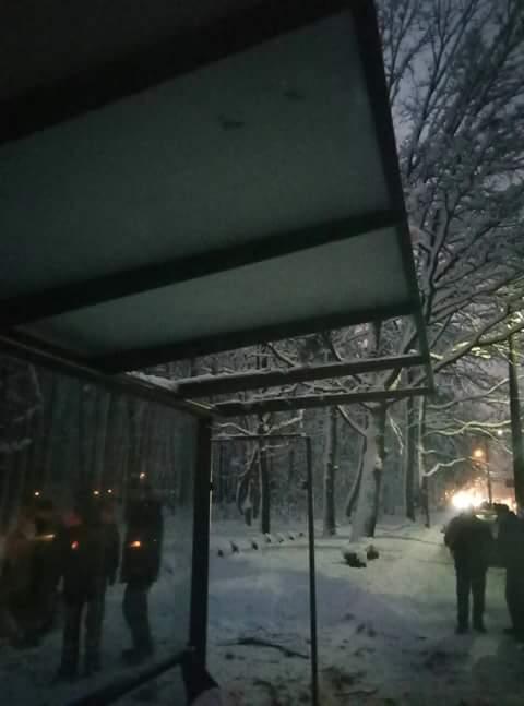В Чернигове упавшая сосна повредила остановку (Фото)