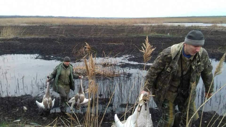 В селе на Днепропетровщине расстреляли лебедей (Фото)