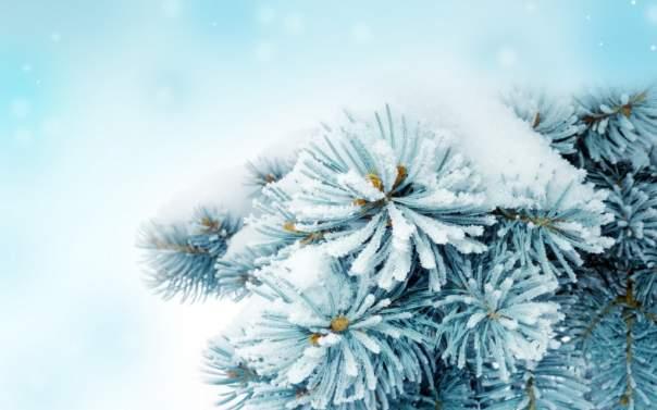 Север США сковали сильные морозы и засыпало снегом