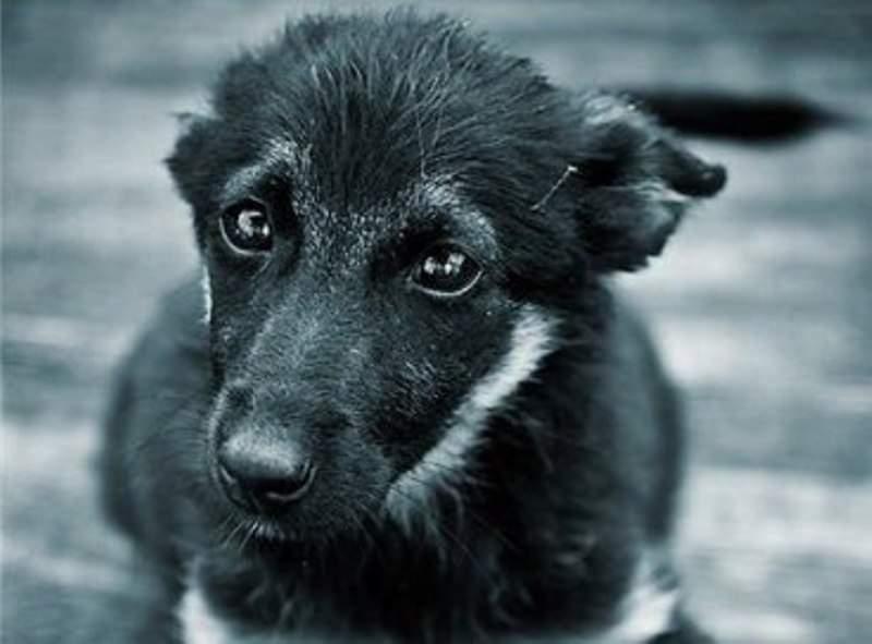 Общественность возмущена расстрелом бездомных собак в столице (Видео)