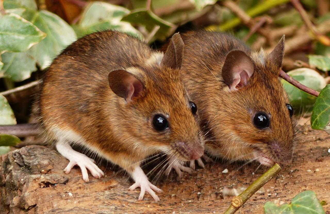 В Казахстане мыши съели в банкомате 100 тысяч казахских тенге (Видео)