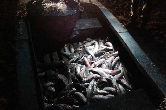 В Запорожской области задержали браконьеров с