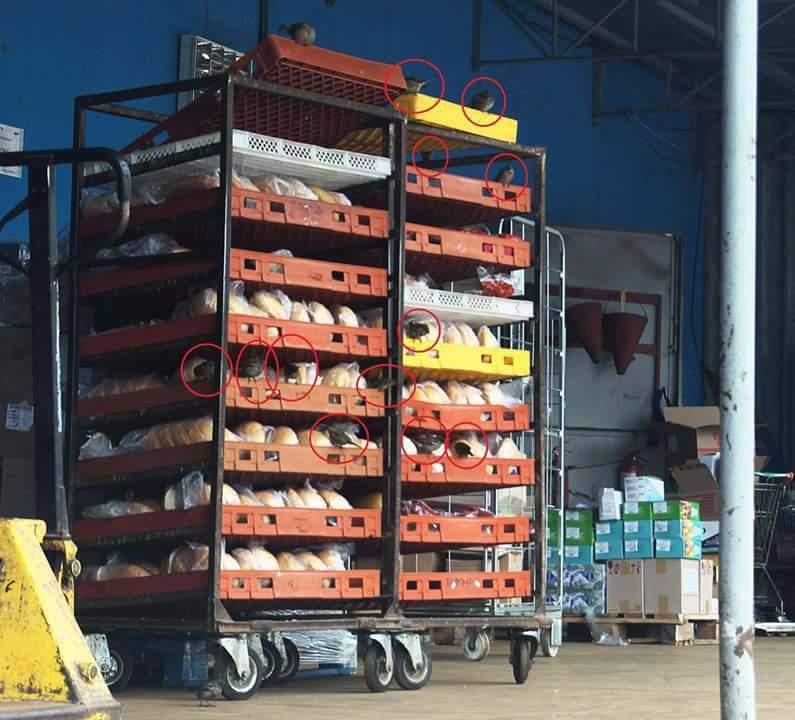 В одесском супермаркете хлеб хранится прямо на улице, где его едят птицы