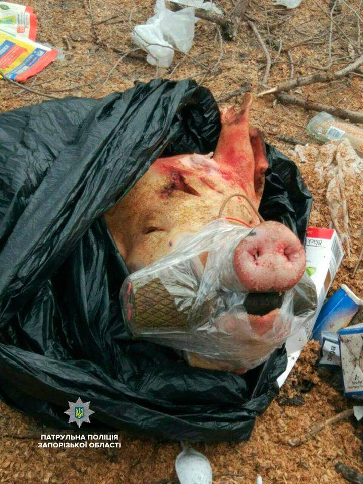 В Запорожье свинья с гранатой во рту напугала людей (Фото)