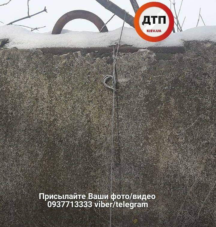 На заборе птицефабрики под Киевом найдены повешенные кошки (Фото)