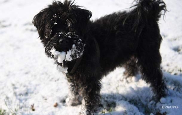 В Киевской области из-за жестокого обращения с собакой полиция открыла уголовное производство