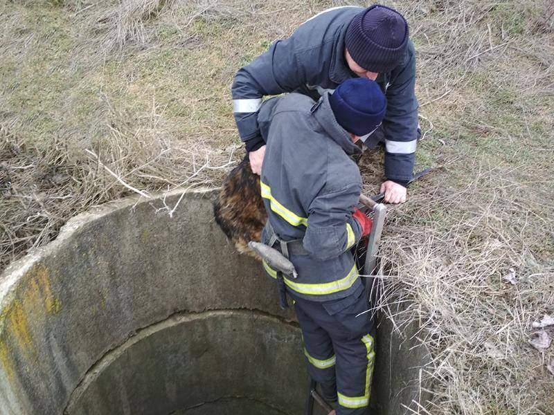Спасатели достали из колодца мужчину и собаку (Фото)