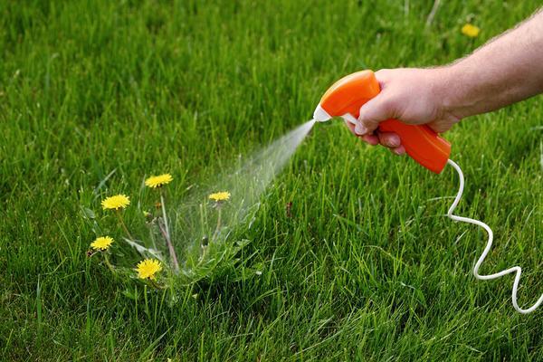 Покупка гербицидов для садоводства