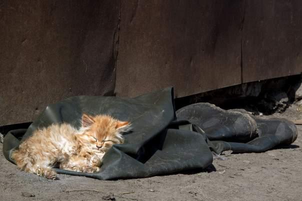 На сайте харьковского горсовета появилась петиция об уничтожении уличных котов