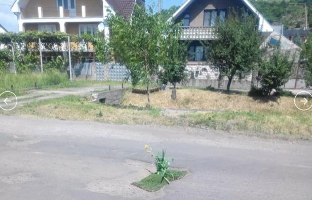 В Закарпатской области в честь плохих дорог жители начали высаживать цветы