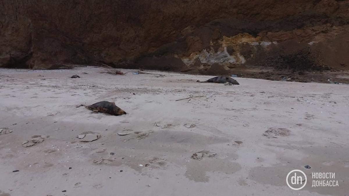 В Донецкой области на берегу Азовского моря обнаружили туши мертвых дельфинов (фото)