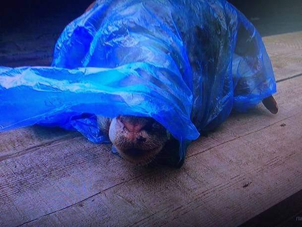 В Луганской области в капот автомобиля местного активиста подбросили голову барана (фото)