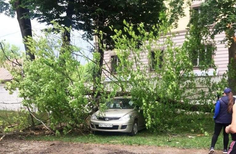 В Ивано-Франковске из-за сильного ветра на автомобиль обрушилось дерево (фото)