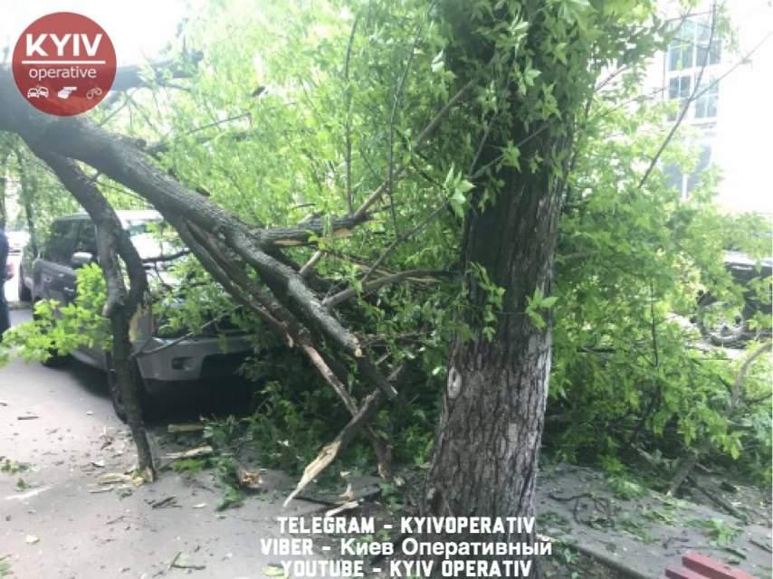 В столице упавшее дерево повредило два автомобиля (фото)