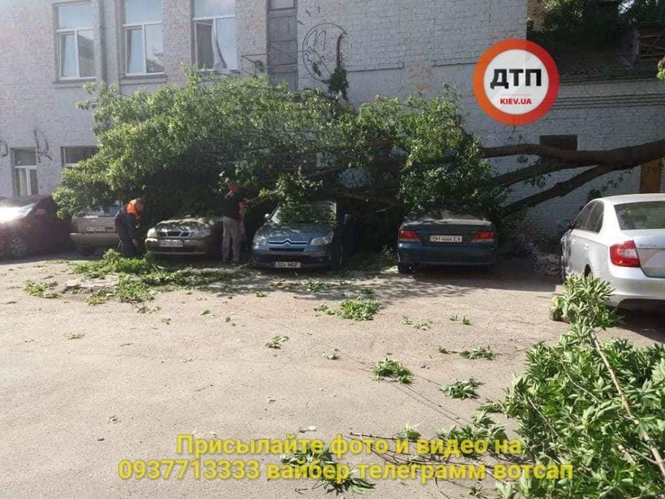 В Киеве  из-за ветра упала огромная ветка на 4 автомобиля (фото)