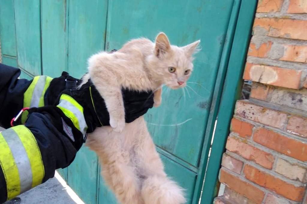 В Днепропетровской области из-за укуса кота, которого пытались снять  с дерева, спасатель попал в больницу