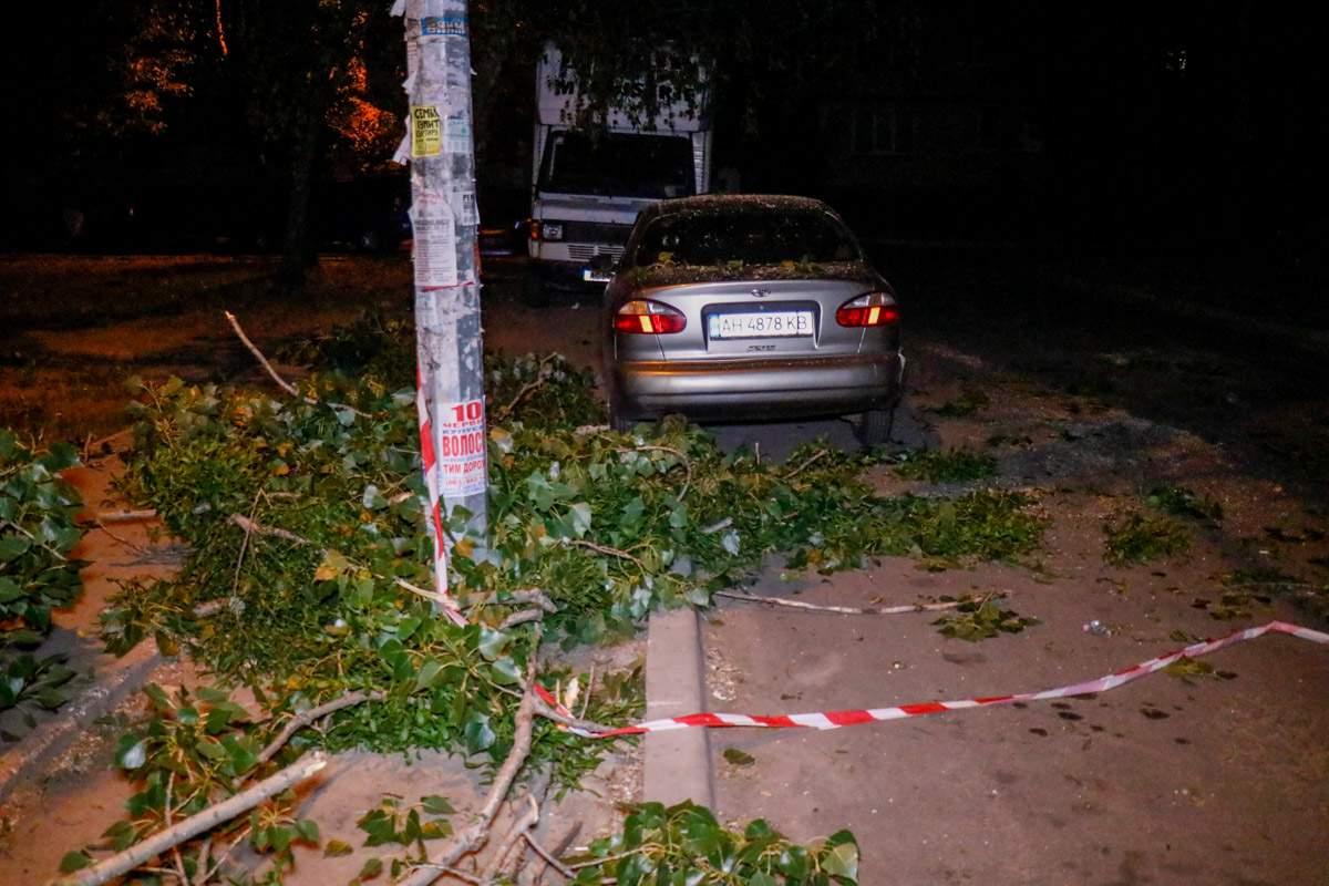В Киеве на припаркованный автомобиль упали ветки с дерева (фото)