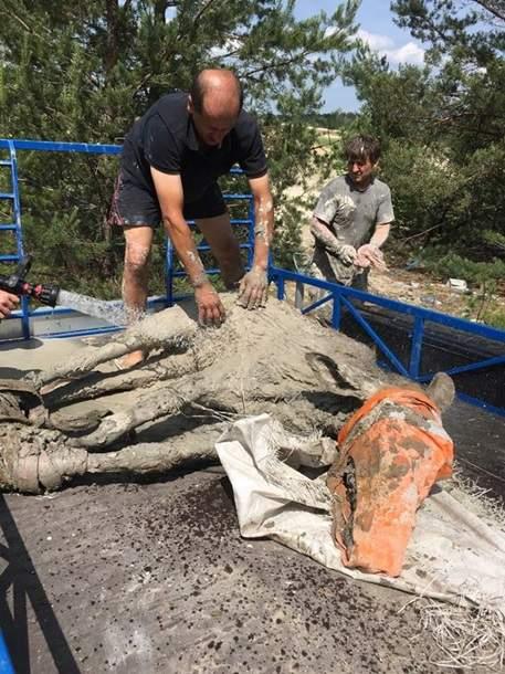 В Житомирской области экологи спасли двух лосей, которые провалились в  глину