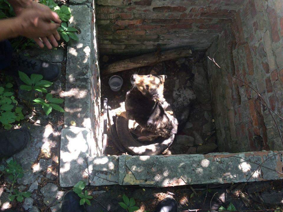 В Донецкой области из колодца достали собаку (фото)