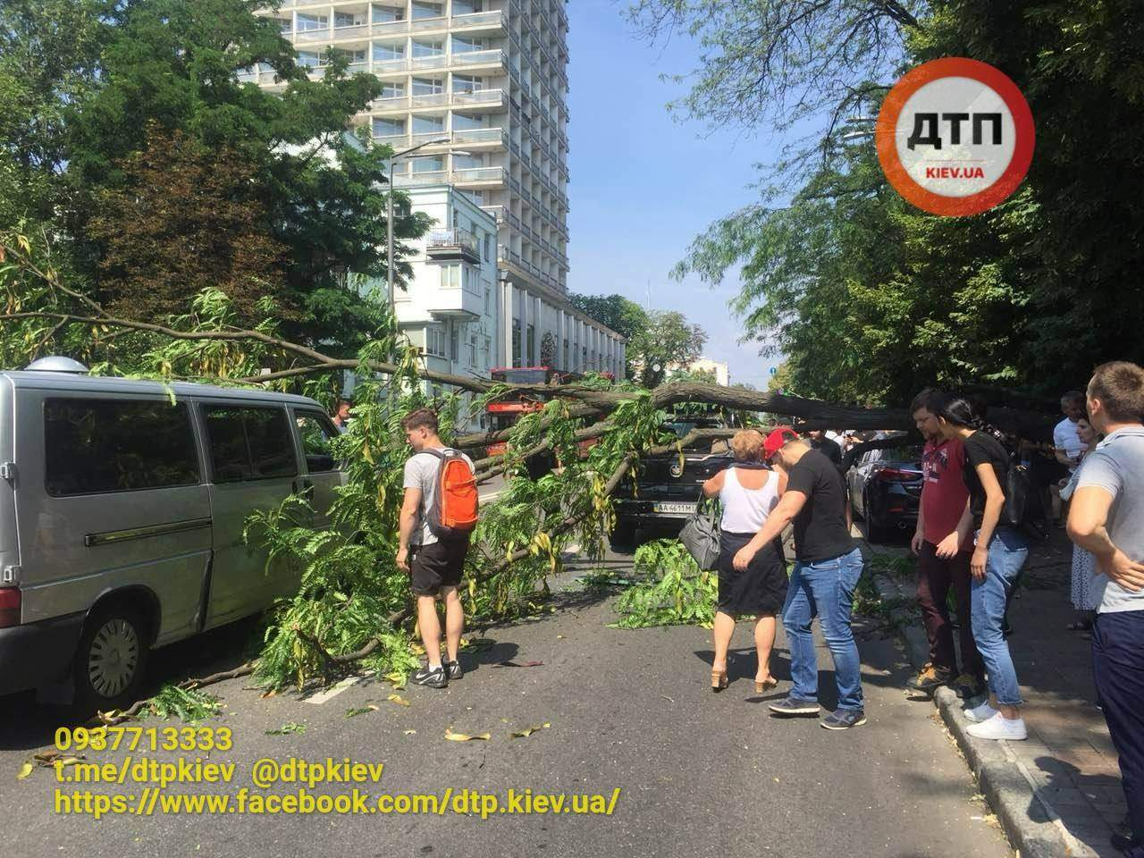 В Киеве перед Верховной Радой на проезжающие автомобили завалилось дерево (фото)
