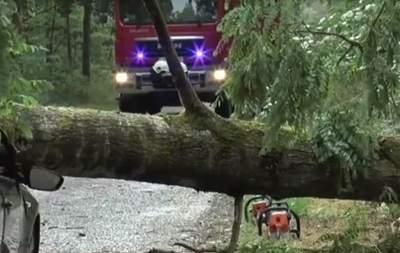 В Польше из-за урагана дерево упало на заместителя мэра города