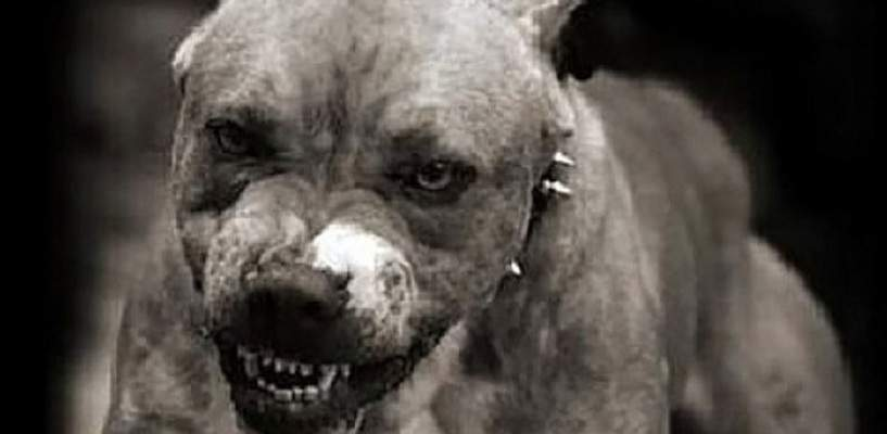 В Киеве неизвестный похитил у хозяйки бойцовскую собаку
