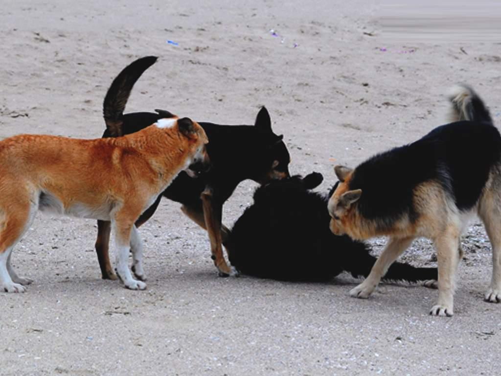 В Николаеве зафиксировали жуткую болезнь, переносчиками которой являются собаки