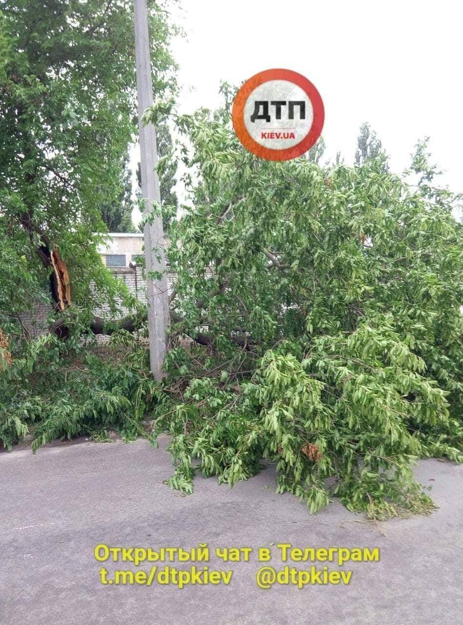 В Киеве на проезжую часть свалилось дерево (фото)