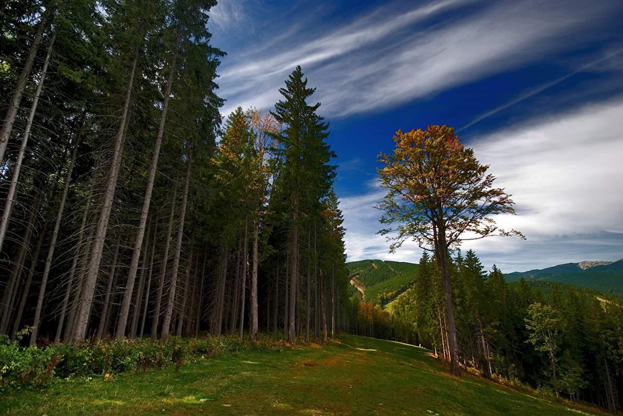 Парламент принял закон о сохранении лесов: за контрабанду светит до 12 лет тюрьмы