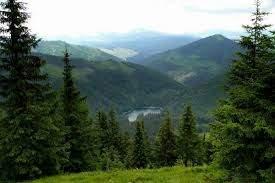 В лесу на Закарпатье заблудилась пожилая киевлянка