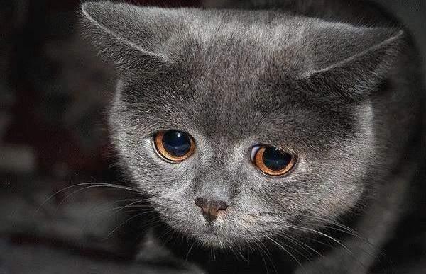 В Харькове неизвестные ворвались в кошачий приют и порубили животных лопатой
