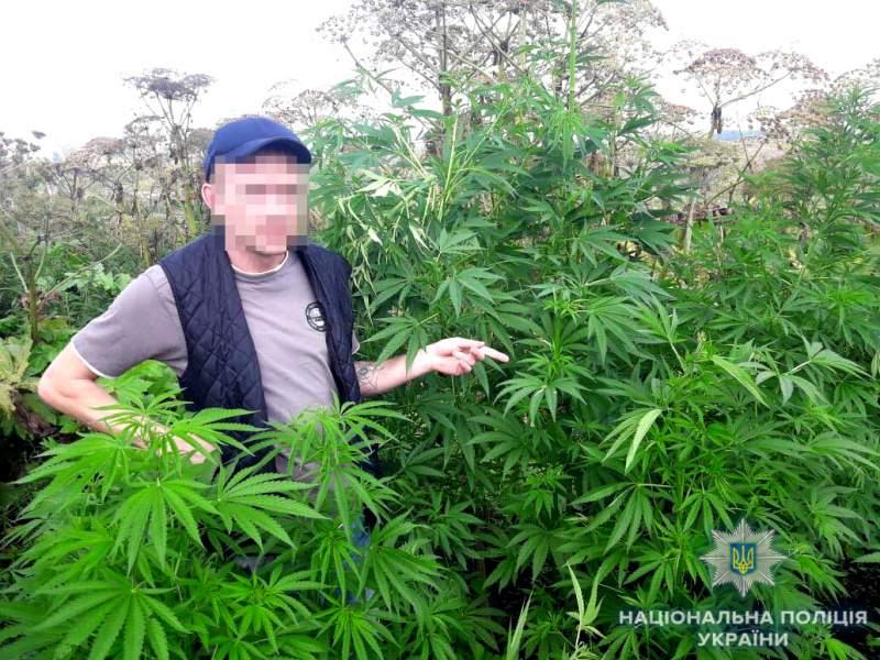 В Ровенской области мужчина выращивал коноплю прямо на огороде (фото)