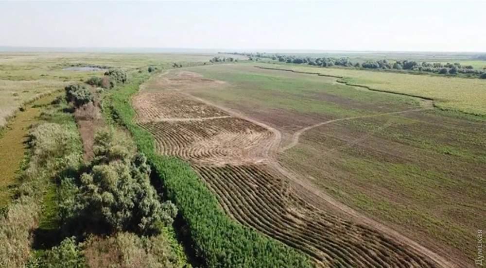 Во владениях у одесского депутата правоохранители обнаружили огромную плантацию конопли