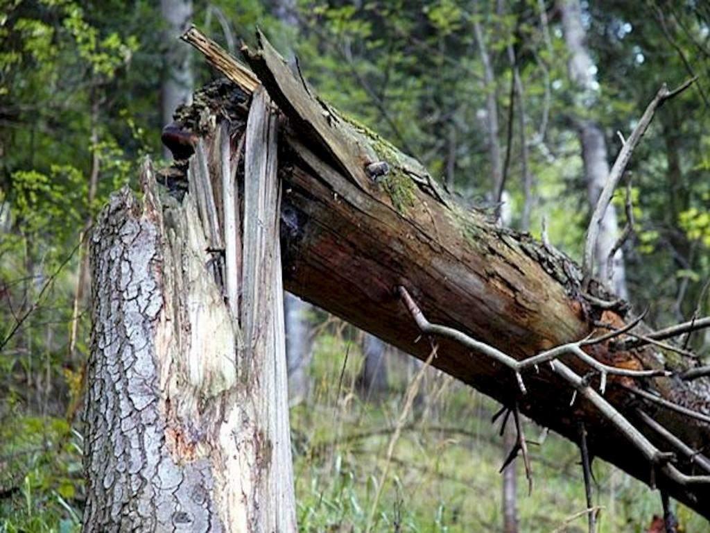 На Херсонщине дерево рухнуло на автомобиль