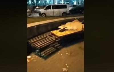 В Киеве националисты разогнали лагерь ромов (видео)