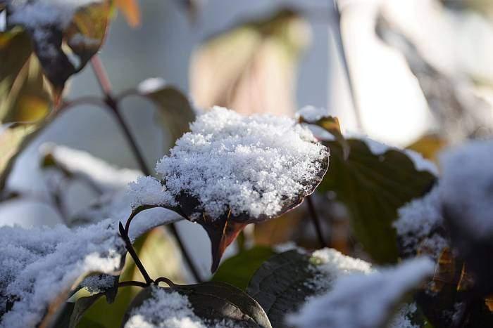 По всей Украине вскоре еще больше похолодает