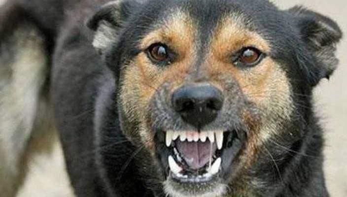 Всего за несколько дней в Николаеве бездомные собаки покусали 9 человек