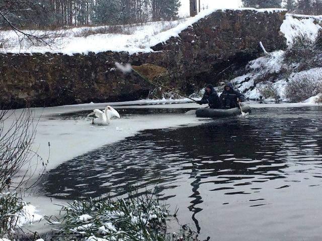 В Житомирской области спасатели вытащили травмированного лебедя (фото)