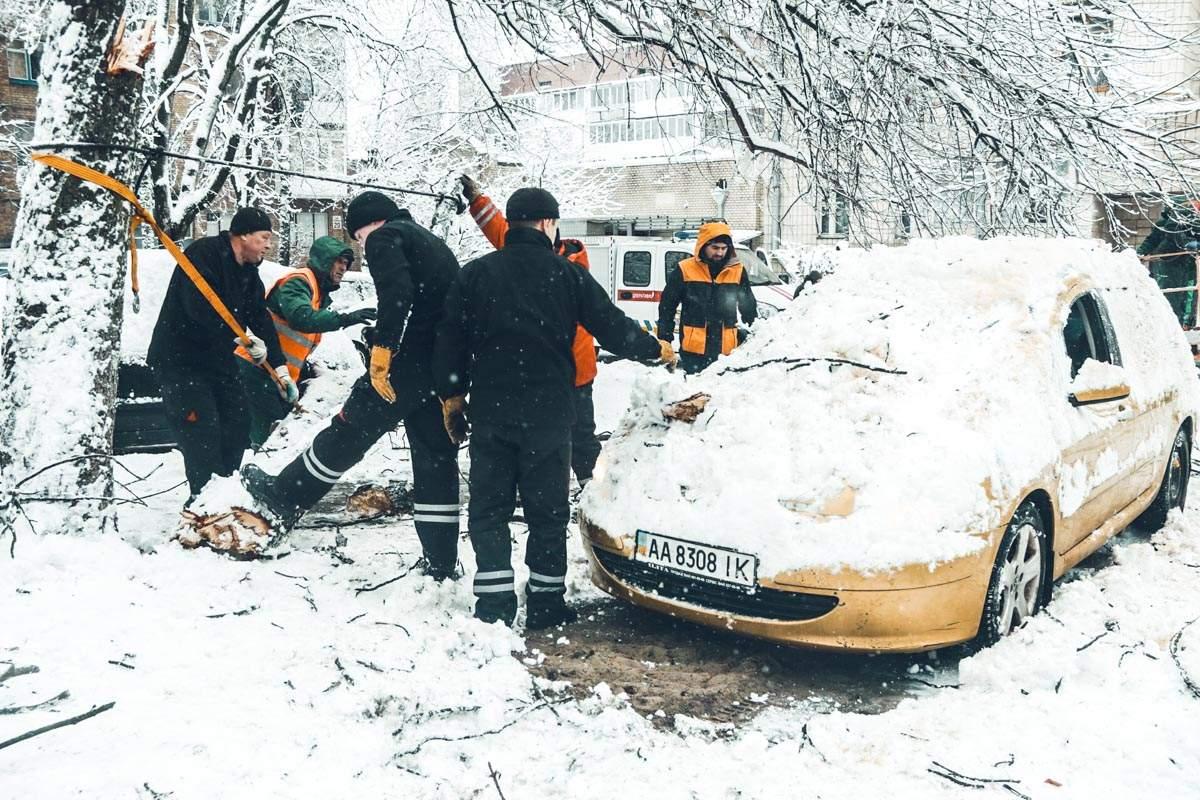 В Киеве на легковой автомобиль упало дерево (фото)