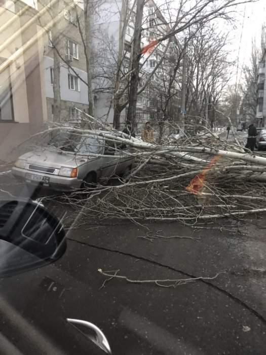 В Николаеве дерево завалилось на проезжую часть и припаркованный автомобиль (фото)