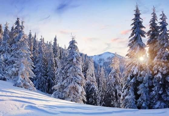 На Закарпатье в горах заблудились туристы из столицы