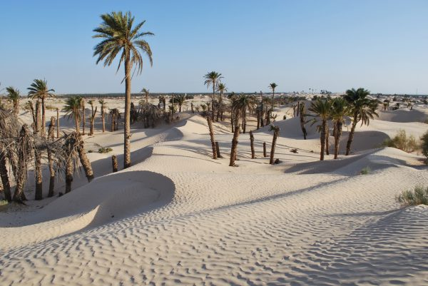 Удивительный мир пустыни и ее обитателей
