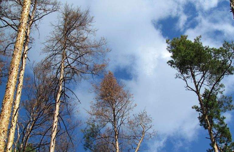 В Житомирской области в лесу нашли тело 21-летней девушки