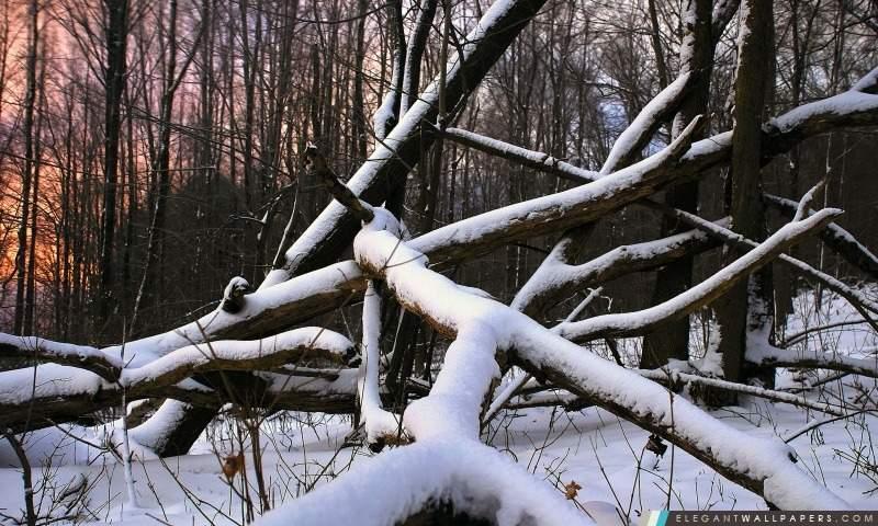 На Харьковщине лесоруба привалило дерево и он погиб